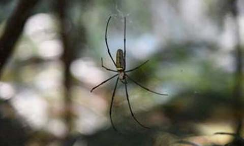 Strange Silk: Why Rappelling Spiders Don't Spin Out of Control