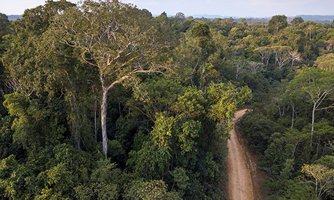 Forest Roads in Amazon