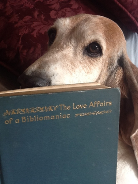 Lucy the dog reading The Love Affairs of a Bibliomaniac by Eugene Field, 1896. This book is not in the Wenner Collection, but you can read all about it in the blog Stevereads