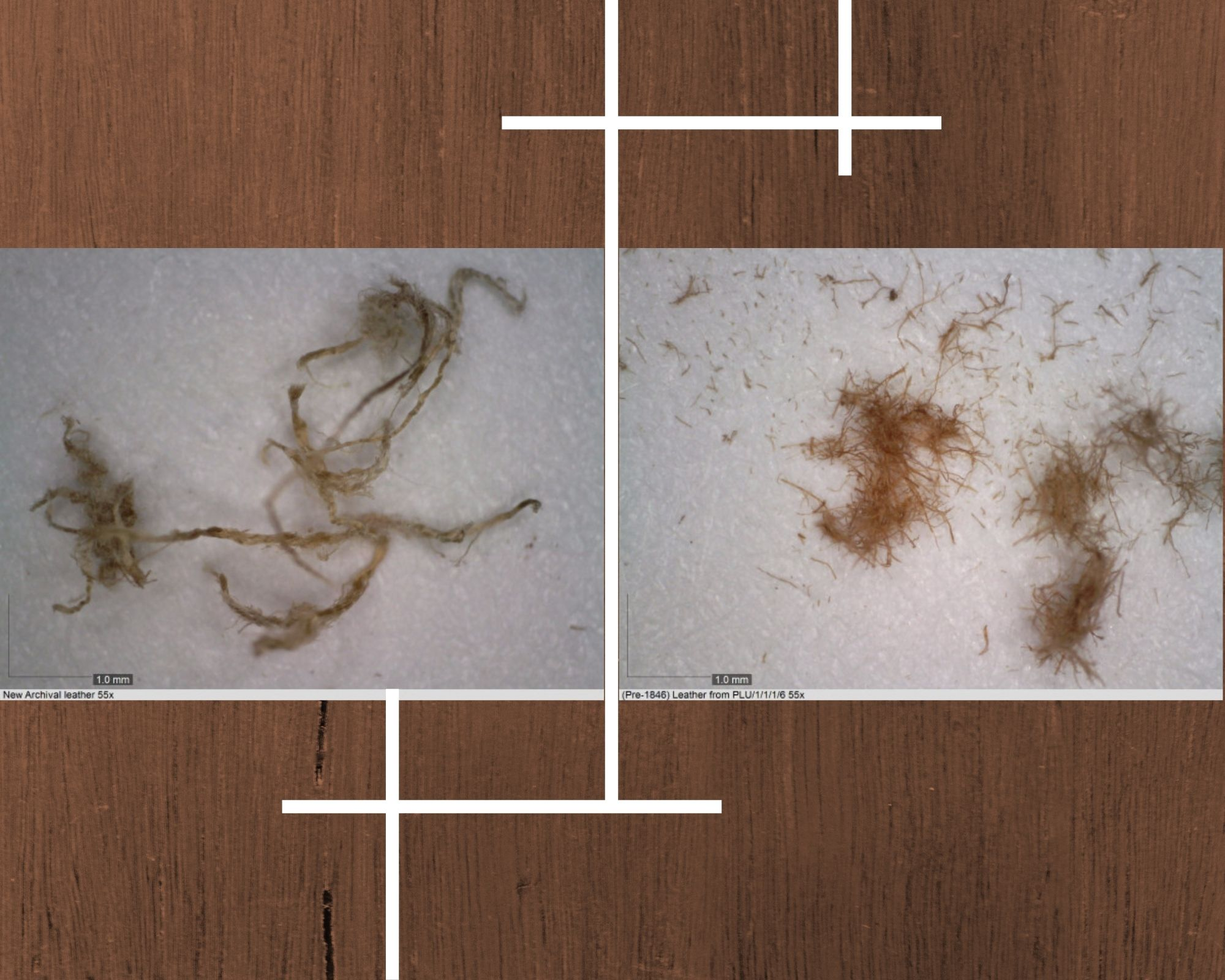 Image on the left depicts a fiber sample from new leather at 55x magnification. Image on the right depicts a fiber sample from deteriorating leather at 55x magnification.